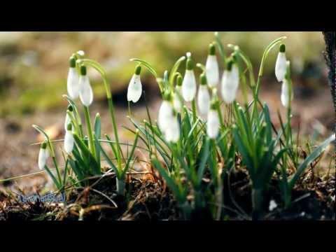Secret Garden - ✿ First day of spring ✿