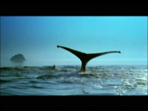Vangelis - Antarctic Echoes