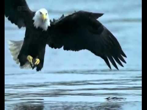 Significado da águia