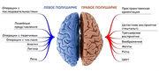 """Бесплатный вебинар """"Введение в активацию полушарий головного мозга, интеллектуальных и творческих способностей"""""""