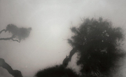 """Exposición: """"El árbol y la sombra"""" de Ricard Chiang (Madrid)"""