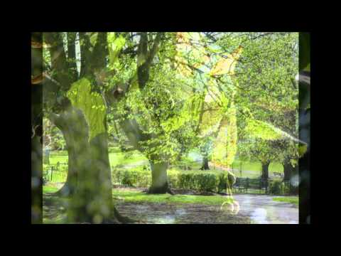 The TREES of ST ANDREWS PARK Bristol narrated by John Telfer