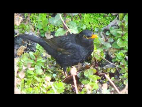 The Birds of  St  Andrews Park, Bristol narrated by John Telfer