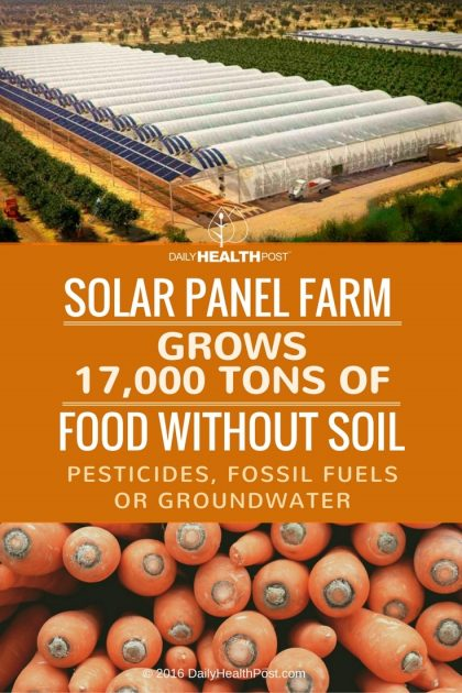 Solar-Panel-Farm-Grows-17000-Tons-Of-Food-Without-Soil-Pesticides-Fossil-Fuels-420x630