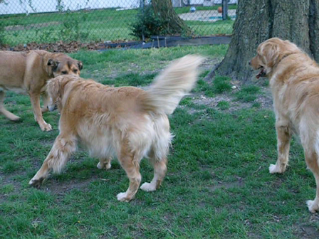 Dogs Outside playing April 2008 003