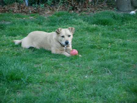 Dogs Outside playing April 2008 008