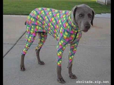 Funny Dog Costumes for Halloween
