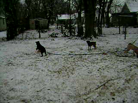 First Snow for Mally Zoe zoe and Izzy
