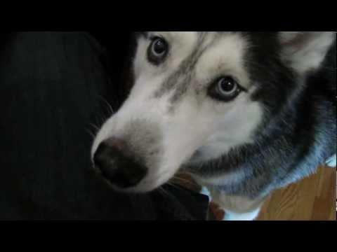 """I love YouTube"" says Talking Dog Mishka"