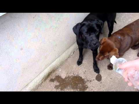 Dogs Drinking From a Bottle