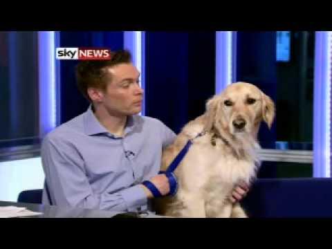 Christmas Dog Loose In Newsroom