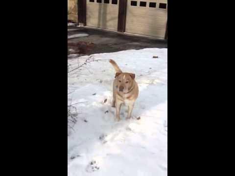 Rosco & Pebbles in the Snow