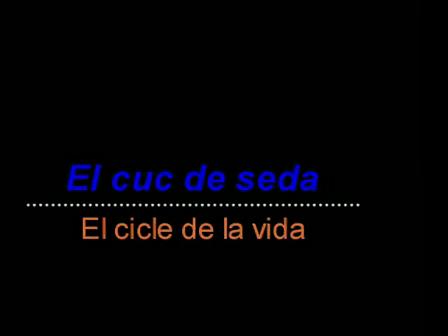 gus_seda