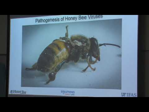Dr. Humberto Boncristiani discusses Honey Bees and their Virus Issues