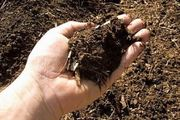 National Compost Day 2020