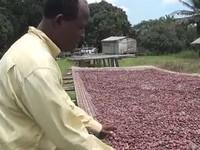 Oxfam Novib - Cacaoboeren gedupeerd door frauderende handeleren