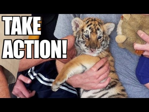 ACTION ALERT: Backyard Tigers