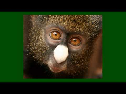 CERCOPAN Primates