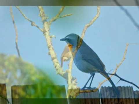 Bird watching # 2 in Africa