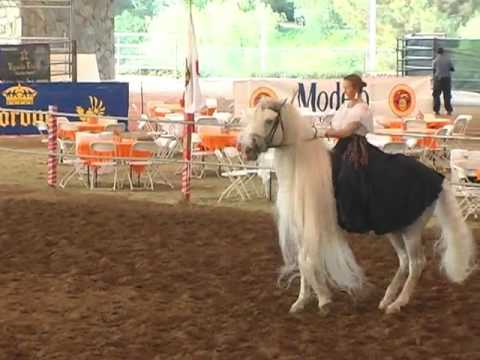 Andalusian Horse Garrido and Mylessa Spanish Dancing at ANNCE Show