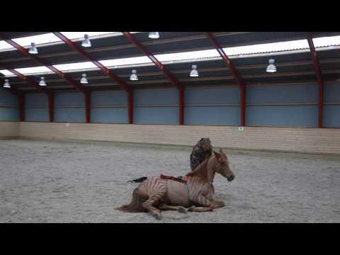 Excellent Horsemanship: Angelina Otakari - Spirit