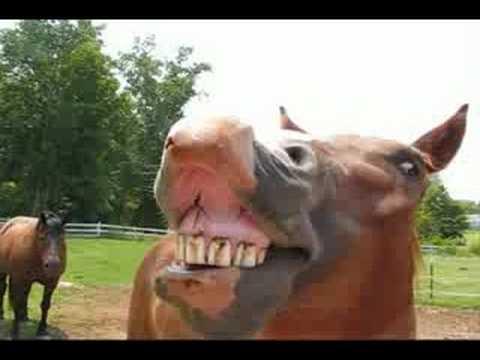 horses singing happy birthday
