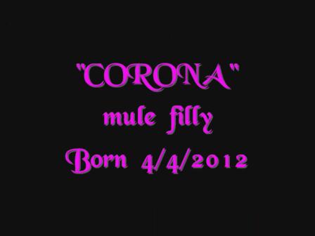 CORONA APRIL 4,2012