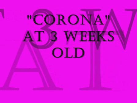 CORONA @ 3 Weeks