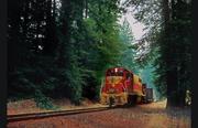 near sequoia