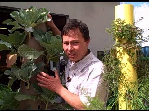 Grow a Patio Vegetable Garden with 14 Crops in 2 Square Feet - The Garden Stick
