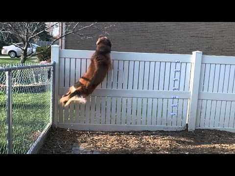 Jumping Dog super slow motion.mov
