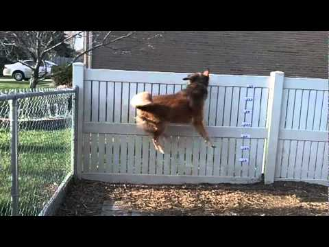 Jumping Dog, slow motion.MOV