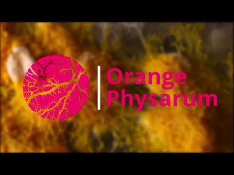 Physarum Polycephalum | Near-Sclerotium Experience