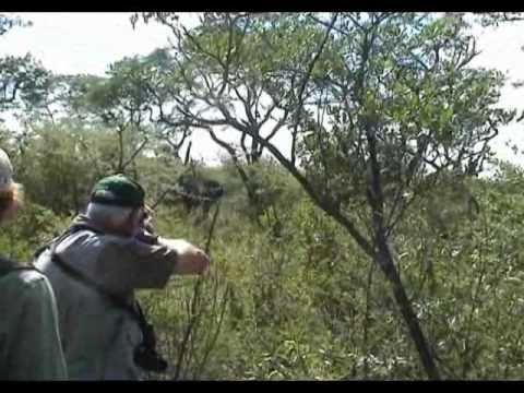 Cazando Elefantes en Botswana