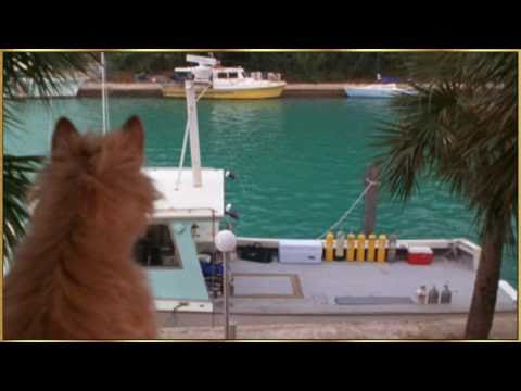 Dolphin and Dog - Song of the Seas by Vangelis.wmv