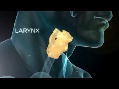 LE LARYNX - Son rôle dans la phonation