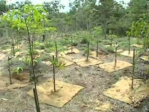 Restauração de Mata de Galeria no Jardim Botânico de Brasília - Projeto Poranga