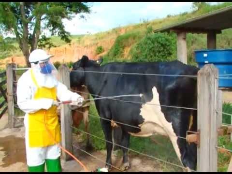 Controle de carrapato em bovinos - Programa Revista do Campo