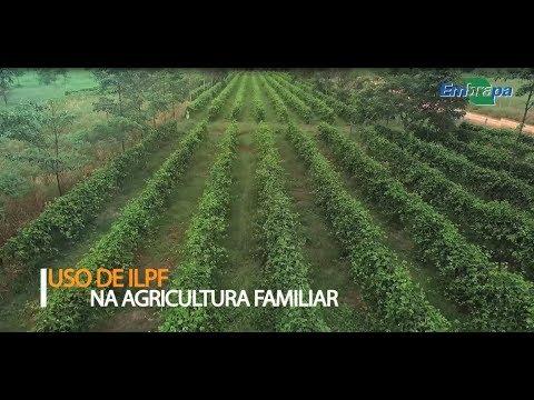 Caso de sucesso: uso de ILPF na Agricultura Familiar