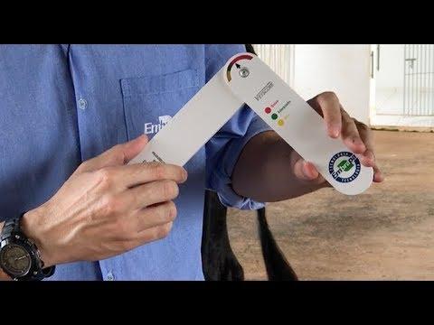VETSCORE - dispositivo para avaliação da condição corporal do rebanho