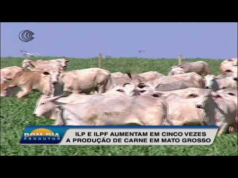 ILP e ILPF aumenta em cinco vezes a produção de carne em Mato Grosso