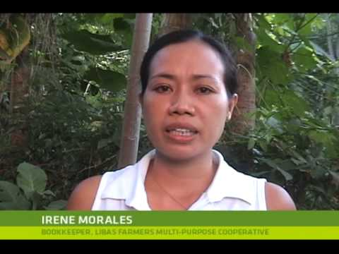 EDP: Moringa leaves in the Philippines