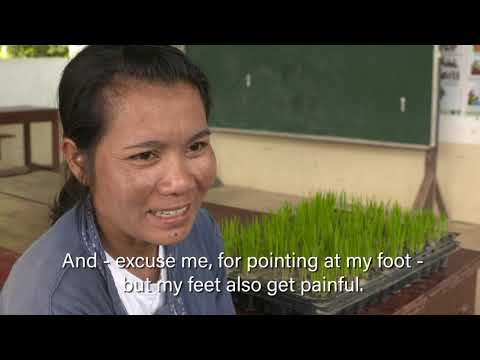 Rice farming: The physical challenges for women