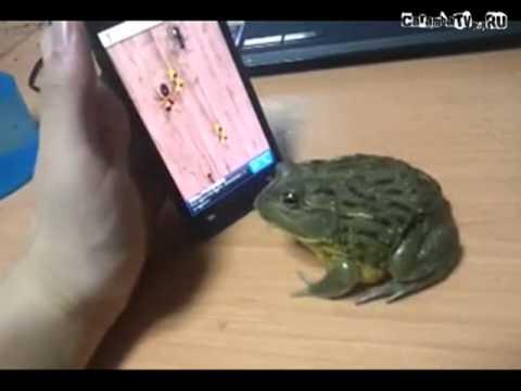 С лягушкой шутки плохи
