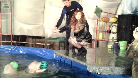 обожаю дельфинов