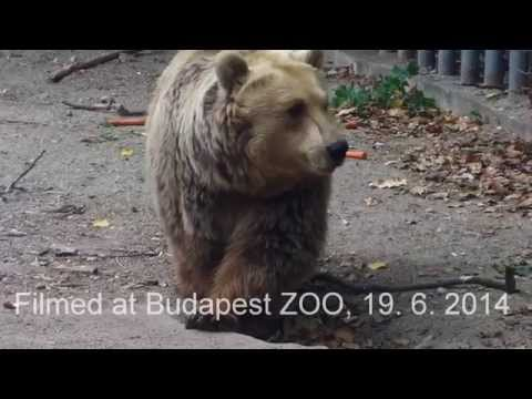 Очень тронуло... Медведь спас ворону!