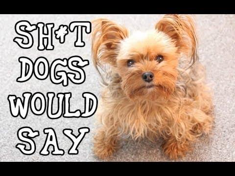 Sh*t Dogs Say: Funny Talking Dog