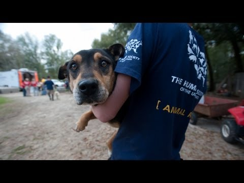 2011 Victories for Animals - The Humane Society of the United States
