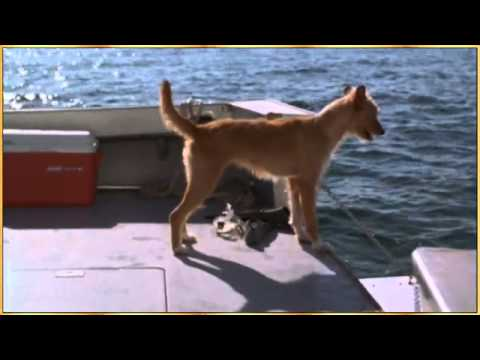 Dolphin and Dog - Let's be Friends.flv