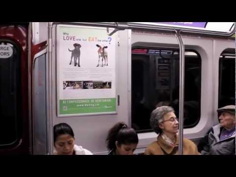 Toronto Subway Riders Come Face to Face with Farm Animals